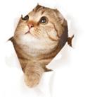 book-bot-cat
